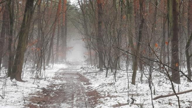Nebel im Februar