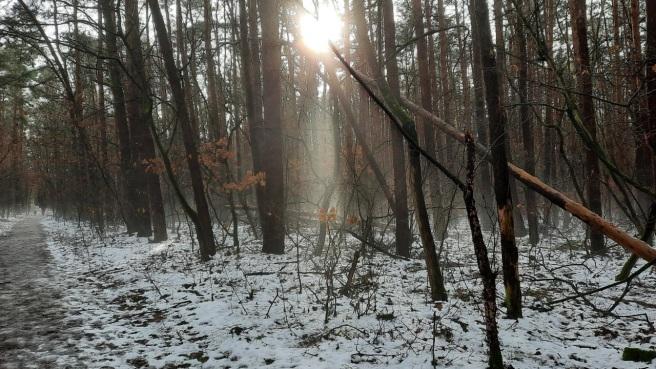 Nebel im Februar2