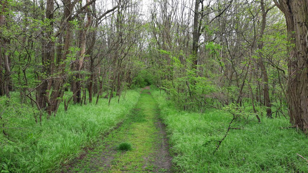 Spapziergang Mitte Mai 2
