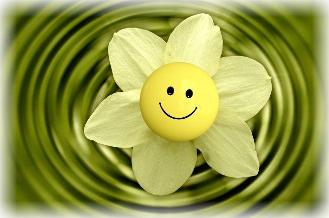 blossom-233838_1920-1