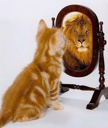 Katze Löwe Spiegel