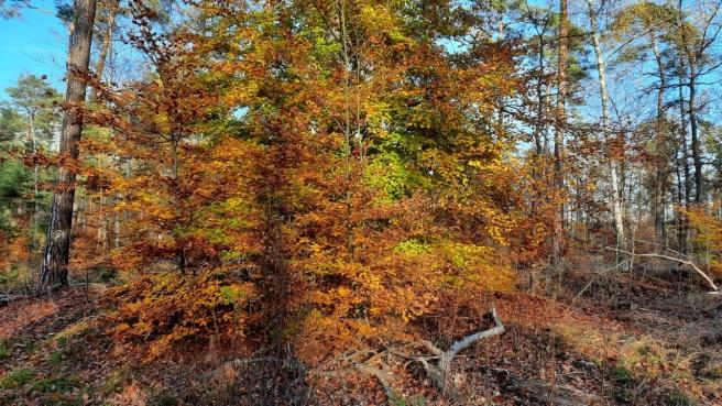 Bunte Blätter rascheln schon